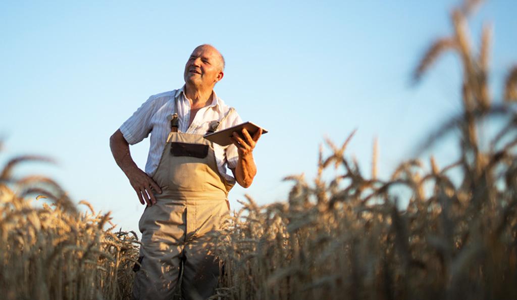 Farmer in crops